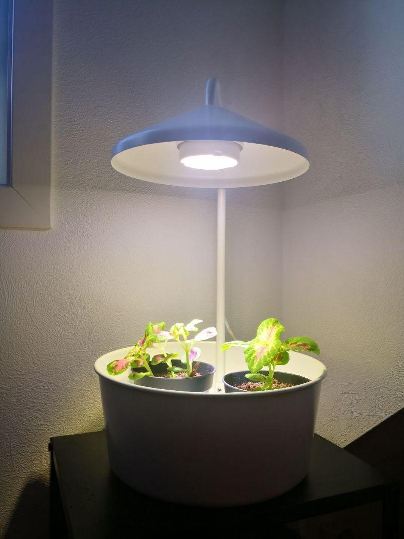 Plantelys Ikea